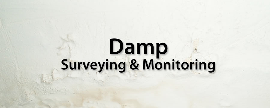 Damp Surveying & Monitoring